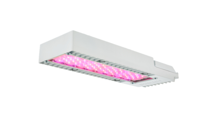 Philips GreenPower LED toplighting compact, LED grow lights for perennials and annuals