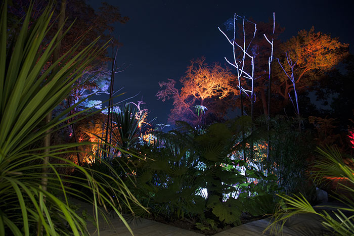 Trees illuminated by Citeos with Philips colourful lighting at International Garden festival, France